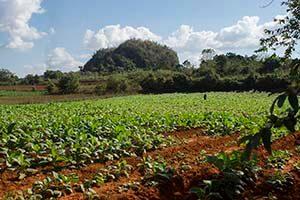 Cuba bouwstenen Tabak plantage