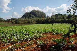 Cuba viajes programas cortos plantacion de tabaco