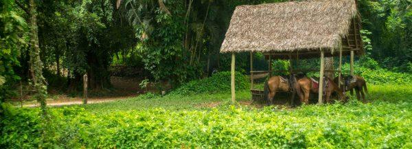 Cuba FAQ paarden Soroa