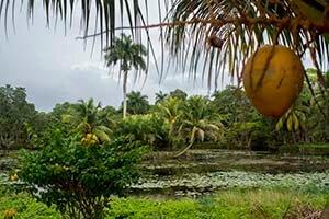 Cuba bouwstenen Cuba Natuurparadijs Guama - Laguna del Tesoro