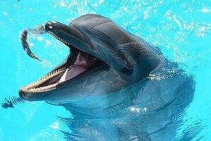 Viajar a Cuba con niños show de delfines