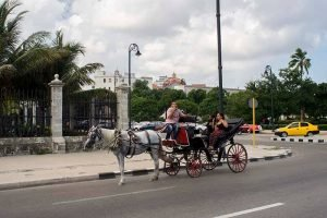 Cuba rondreis Havana en het Centrum Havana Paard