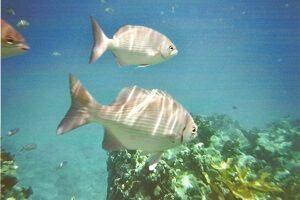 Cuba rondreis excursie in in het koraalrif
