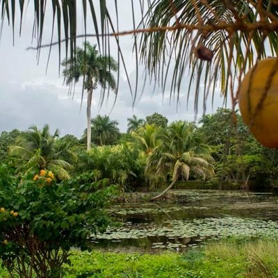Guamá