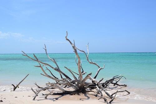 Cuba bezienswaardigheden - Playa Larga