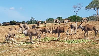 zoologico - Cuba