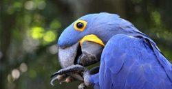 bird-3474466_640-min