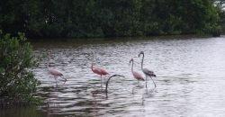 Cuba bezienswaardigheden Moron mooi flamingos